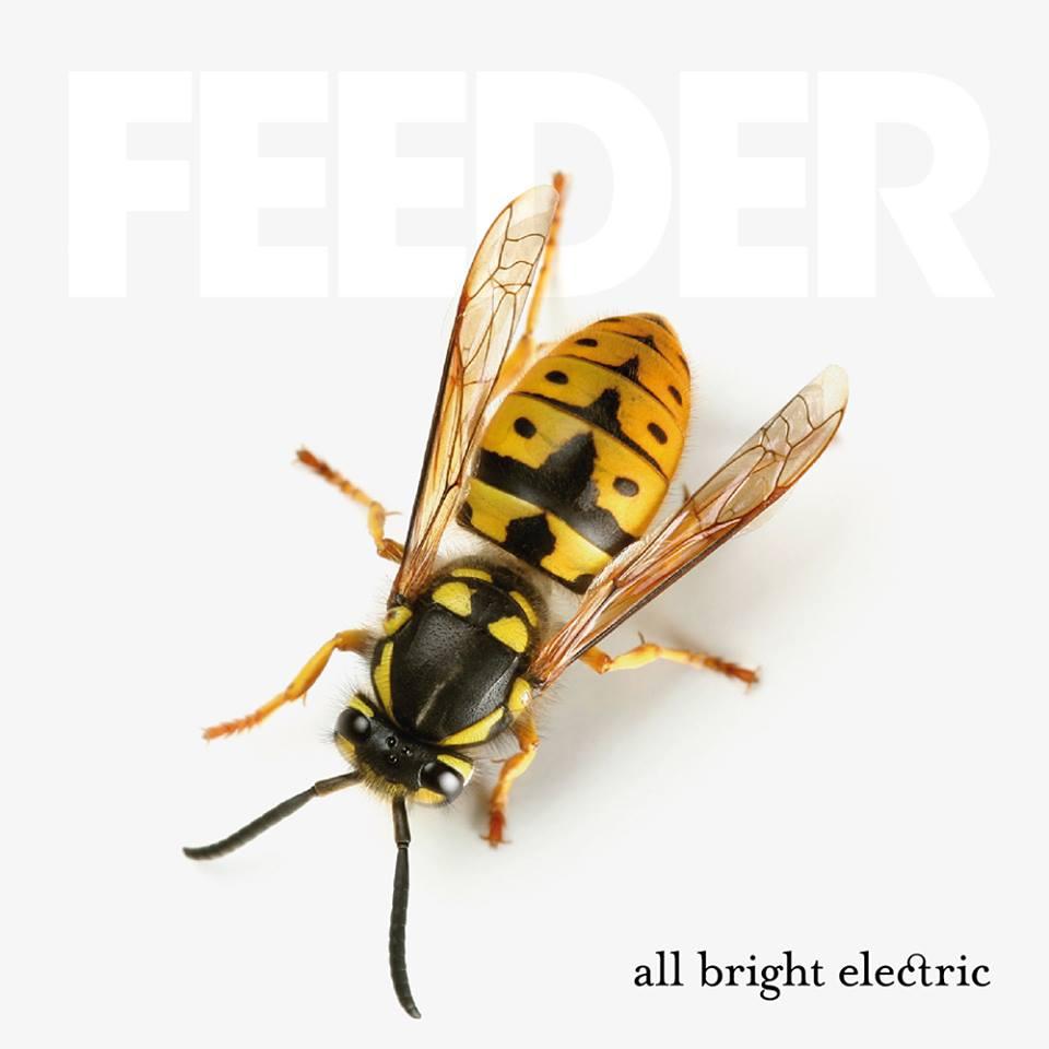 「feeder all bright electric 画像」の画像検索結果
